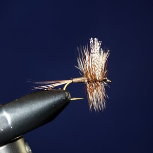 Cornies Quill tied by Paul Beel