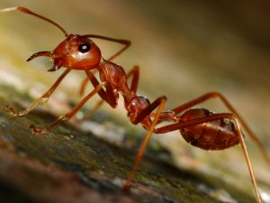 Red_Ants_(1214176165)