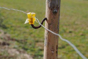 800px-Yellow-insulator-electric-fence