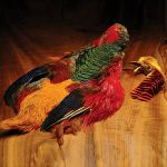 Hareline Golden Pheasant Skin without Tail _D_