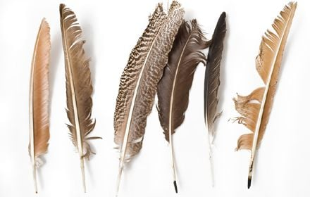 Other Feathers