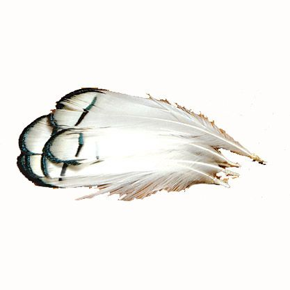 Hareline Lady Amherst Tippet